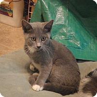 Adopt A Pet :: Bebe - Quail Valley, CA