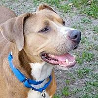 Adopt A Pet :: Vito - Pawling, NY