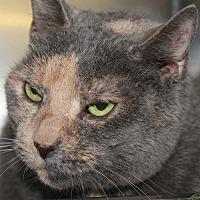 Adopt A Pet :: TRISHA - Clayton, NJ