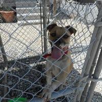 Adopt A Pet :: Clyde - Opelousas, LA