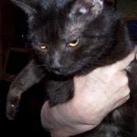 Adopt A Pet :: Lucy (black) - Garland, TX