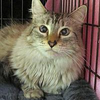 Adopt A Pet :: Ashlee 'Ash' - Spokane Valley, WA