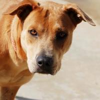 Adopt A Pet :: Georgia-Ann - Toccoa, GA