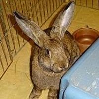 Adopt A Pet :: Violet - Woburn, MA