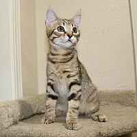 Adopt A Pet :: Danny Rand - Edmond, OK