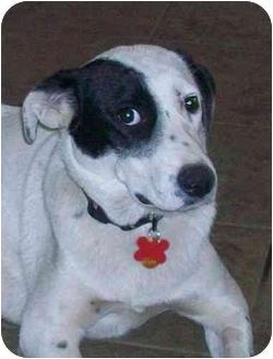 Border Collie Mix Dog for adoption in Scottsdale, Arizona - Pip (Flagstaff)