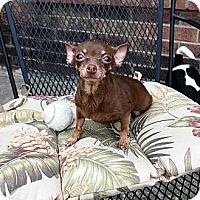 Adopt A Pet :: Maxine - Plano, TX
