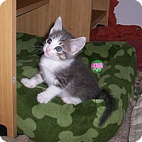Adopt A Pet :: Whitney - Orlando, FL