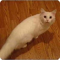 Adopt A Pet :: Milky--PETSMART - Muncie, IN