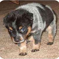 Adopt A Pet :: Trish - Phoenix, AZ