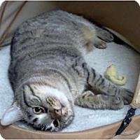 Adopt A Pet :: Meesa - Centerburg, OH