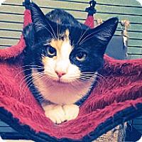Adopt A Pet :: Penelope Cruz - Richboro, PA