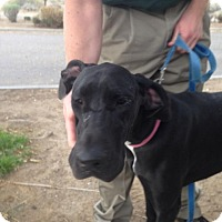 Adopt A Pet :: Regen - Albuquerque, NM