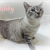Adopt A Pet :: Abby - Orange City, FL