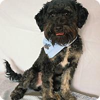 Adopt A Pet :: Frodo - Aurora, CO