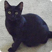 Adopt A Pet :: Spring - Kensington, MD
