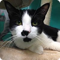 Adopt A Pet :: Timothy - Newport Beach, CA