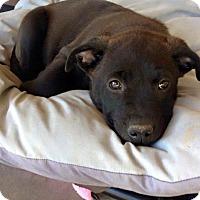 Adopt A Pet :: KONA - Gilbert, AZ