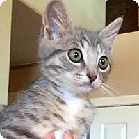 Adopt A Pet :: Toby - Modesto, CA