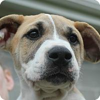 Adopt A Pet :: Gilligan - Knoxville, TN