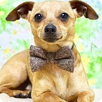 Adopt A Pet :: Rory - Dublin, CA