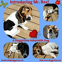 Adopt A Pet :: Rex - Warkworth, ON