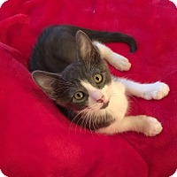 Adopt A Pet :: Sammy-see Sawyer too - Scottsdale, AZ