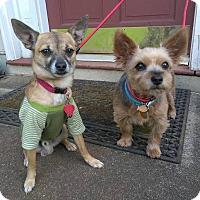 Adopt A Pet :: Luckee & Bentley - Lawrenceville, GA