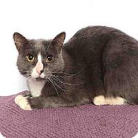 Adopt A Pet :: ADDIE - Murray, UT