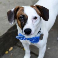 Adopt A Pet :: Ted - Carrollton, TX