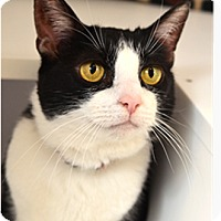Adopt A Pet :: Parkie - Novato, CA