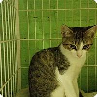 Adopt A Pet :: Shirley - Bloomingdale, NJ