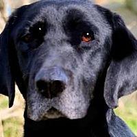 Adopt A Pet :: BELL(THROWN AWAY--PLS READ!!! - Wakefield, RI
