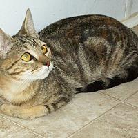 Adopt A Pet :: Olive - Mexia, TX
