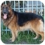 Photo 4 - German Shepherd Dog Mix Dog for adoption in Los Angeles, California - Chopper von Carlsbad