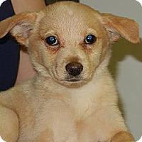 Adopt A Pet :: Mae - South Jersey, NJ