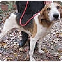 Adopt A Pet :: Scott - Chesterfield, VA