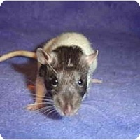 Adopt A Pet :: NomNom - Winner, SD
