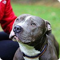 Adopt A Pet :: Micah - Reisterstown, MD
