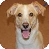Adopt A Pet :: Sprocket - Phelan, CA