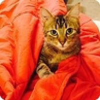 Adopt A Pet :: Cordova - Vancouver, BC
