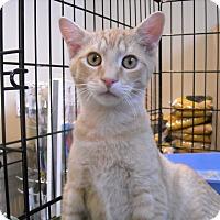 Adopt A Pet :: Sampson-Adoption Pending! - Arlington, VA