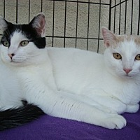 Adopt A Pet :: Bonnie and Emmy - Berkeley, CA