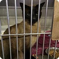 Adopt A Pet :: Leilah - Byron Center, MI