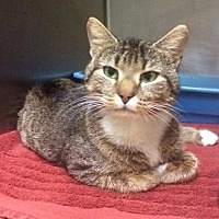 Adopt A Pet :: Jasmine - Port Clinton, OH