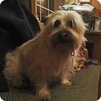 Adopt A Pet :: Dudley - Bellingham, WA