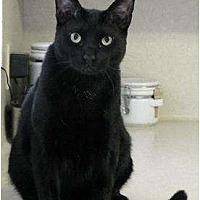 Adopt A Pet :: Robbie - Alvin, TX