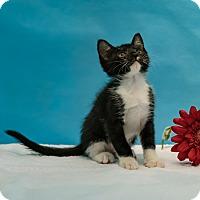 Adopt A Pet :: Donald - Houston, TX