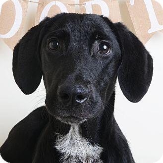 Mixed Breed (Medium)/Labrador Retriever Mix Dog for adoption in Wilmington, Delaware - Fawn