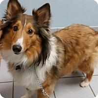Adopt A Pet :: Doogan aka Daryl - COLUMBUS, OH